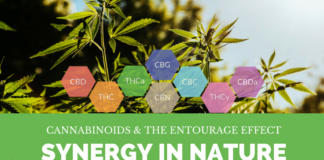 Cannabinoids and the Entourage Effect: Synergy in Nature