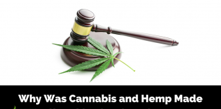 Legacy of CBD: Legalization History of Cannabis & Hemp