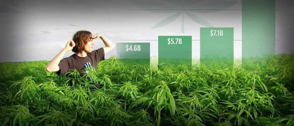 Cannabis Industry Value