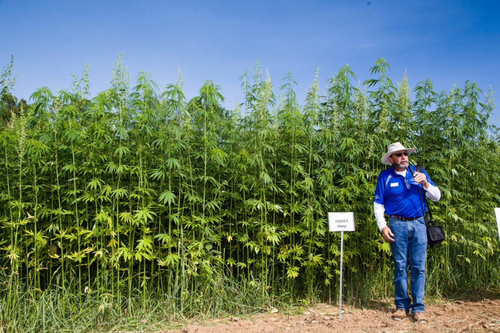 The Rise of the Hemp Industry