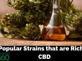 Most Popular CBD Rich Cannabis Strains
