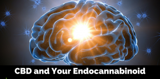 Endocannabinoid System and CBD