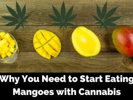 Benefits of Eating Mangoes with Cannabis