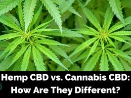 Hemp CBD vs. Marijuana CBD