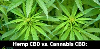 Hemp CBD vs. Marijuana CBD