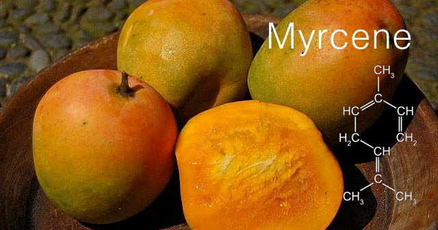 Myrcene Enhances the Effects of Cannabis