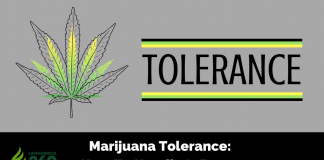 Marijuana Tolerance: How To Handle It Better