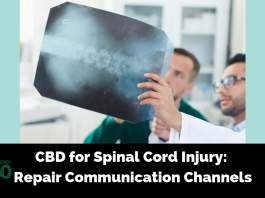 CBD for Spinal Cord Injury: Repair Communication Channels