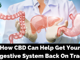 How CBD Can Help Get Your Digestive System Back On Track