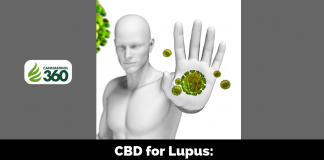 CBD for Lupus: Your Body's Defense Against Itself