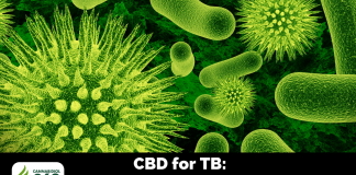 CBD for TB: Incapacitate the Bacteria