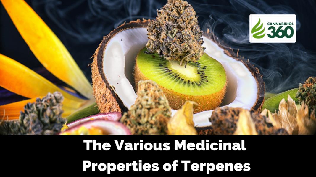 The Various Medicinal Properties of Terpenes