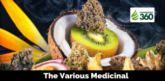 The Various Medicinal Properties of Terpenes