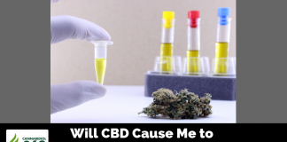 Will CBD Cause Me to Fail a Drug Test?