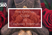 The Official Guide to Cannabis Terpenes