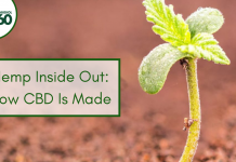 Hemp Inside Out: How CBD Is Made