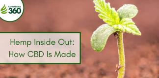 Hemp Inside Out: How CBD Is Made